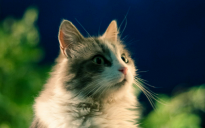 Meow Moon